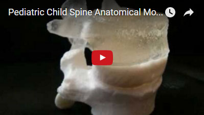 Pediatric spine model, identical size and shape of six year old spine (L4-5)