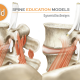 Core Muscles of Spine