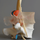 Chiropractic Models - Dynamic Disc Designs
