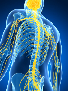 Analyzing the Sensorimotor Control of the Spine